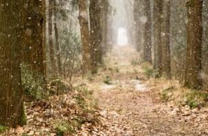 Пожилой смолянин, проплутавший ночь в лесу, нашелся