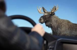 В Гагаринском районе иномарка сбила лося. Есть пострадавшие