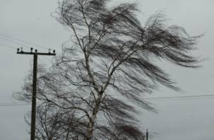 Завтра Смоленщину накроет сильный ветер