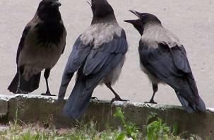 Смоляне посчитали ворон в национальном парке