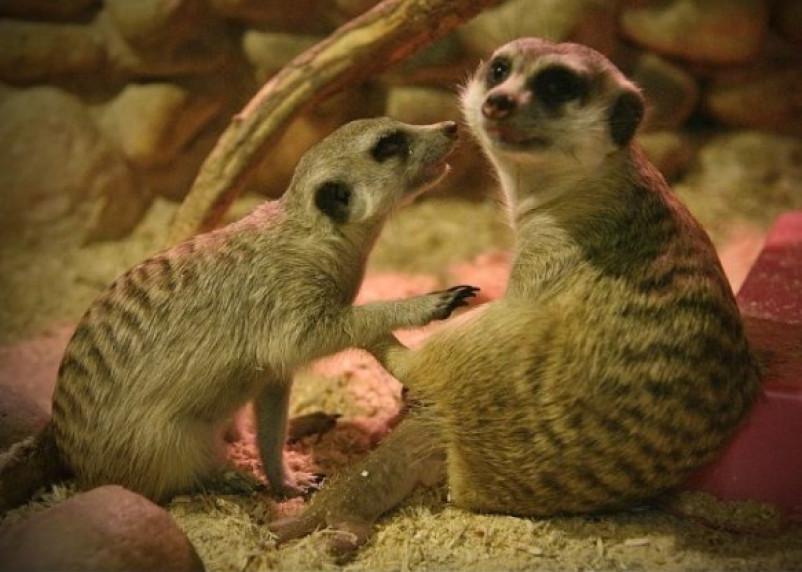В Смоленском зоопарке выбрали короля и королеву красоты