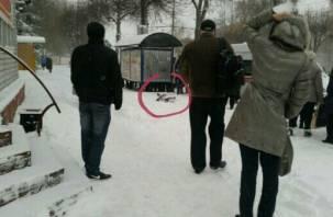 Смолянин скончался на остановке общественного транспорта