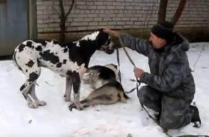 Видео: В Смоленске породистый пес не отходил от своего мертвого друга