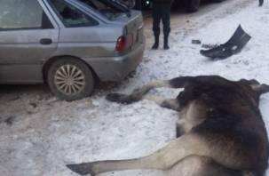 Под Смоленском сбили лося, два человека в больнице