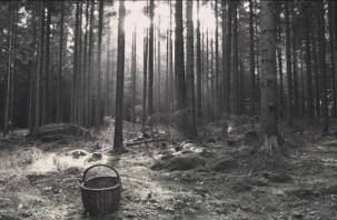 Смоленские поисковики нашли тело пенсионерки, ушедшей в лес 4 сентября