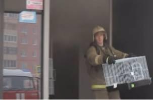 Драма со спасением животных из горящего магазина попала на видео