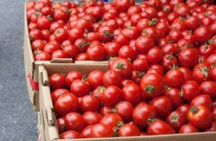 Под Смоленском закопали 17 тонн томатов