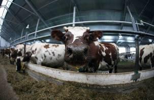 Смоленских фермеров поддержат увеличенными грантами