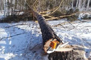 Заготовка дров обернулась для смолянина уголовным делом