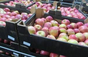 Под Смоленском задержали 19 тонн польских яблок