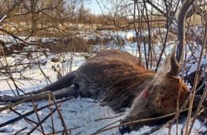 За убийство оленя смолянин может лишиться свободы