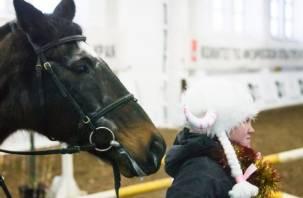 В Смоленске состоится новогоднее шоу-конкур