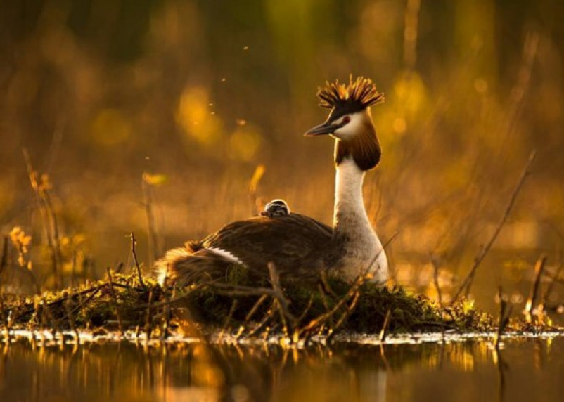Смоленский фотограф – в числе победителей конкурса журнала National Geographic