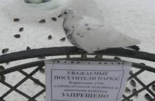Смолянам запретили кормить уток в Лопатинском саду