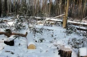 Смолянин нарубил дров на полмиллиона рублей