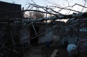 В Ярцевском районе пьяные лесорубы свалили березу на жилой дом