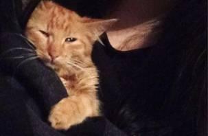 Студентки СмолГУ глумились над погибающим котом и фотографировали его труп