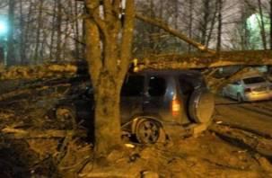Из-за сильного ветра в Смоленске деревья и столбы падали на машины