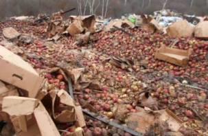 Под Смоленском уничтожили более 20 тонн яблок