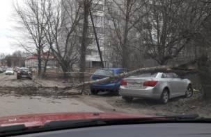 Сильный ветер в Смоленске продолжает валить деревья
