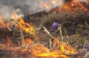 На Смоленщине объявлен пожароопасный сезон