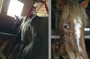 Пятый телеканал рассказал об издевательствах над лошадьми на Смоленщине