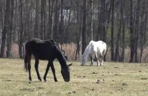 Люди и лошади. Три мнения о нашумевшей истории