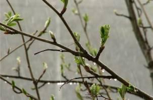 С какой погоды начнется май на Смоленщине