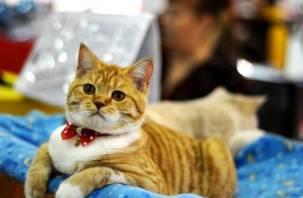 Смоляне смогут увидеть редкие породы кошек