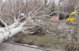 Работницу сафоновского завода придавило спиленным деревом