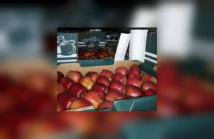 Через Смоленск пытались провезти вместо медикаментов польские яблоки и томаты