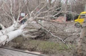 Смерть смолянки под деревом приобрела уголовный оттенок
