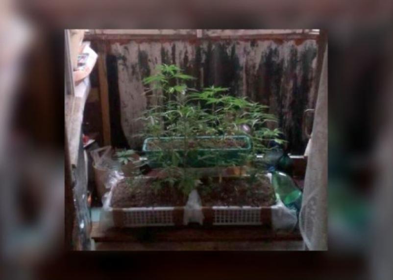 Смолянин вырастил на своем балконе 45 кустов конопли (фото)