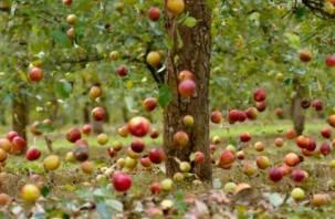 Польские фермеры не будут выращивать яблоки на Смоленщине