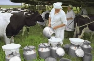 В Смоленской области продолжает снижаться производство молока