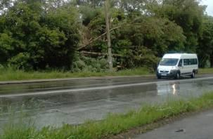 Стихия в Смоленске: падающие деревья, остановившиеся трамваи и другие неприятности