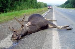 Из-за лося в Смоленской области произошло масштабное ДТП