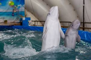 Смоляне собираются на пикет против передвижного дельфинария