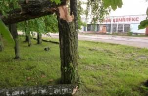 По Смоленской области прошелся штормовой ветер (фото)