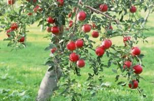 Полякам предложили разбить яблоневые сады на Смоленщине