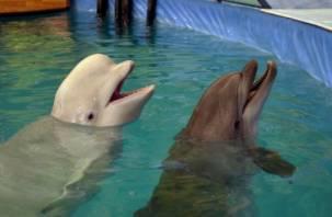 Смоленским зоозащитникам запретили пикет около дельфинария