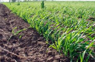 Весенний сев в Смоленской области подходит к завершению
