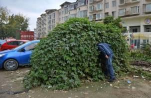 Смолянин спрятался в кустах после нападения на девушек в Белгороде
