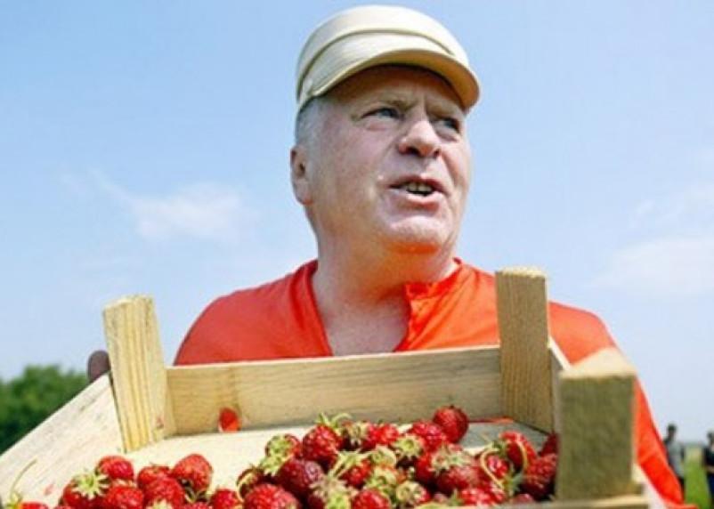 Приедет ли Жириновский в Смоленск за клубникой?