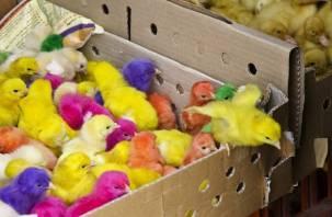 «Птичку» жалко? В Смоленске продавцы животных «кочуют» с места на место