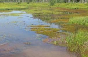 В Смоленске в Реадовском озере снова утонул человек