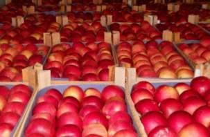 У смолянина в Калуге отобрали 20 тонн яблок