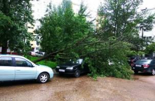 В Смоленске на автомобиль рухнуло дерево