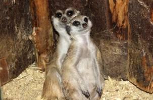 Смоленский зоопарк предлагает покормить зверушек