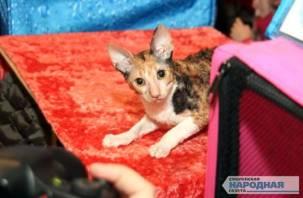 Смолян приглашают посетить международную выставку кошек